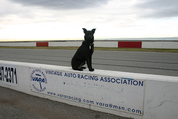 Dale E Dog is                                                   getting older so the                                                   shared events with the                                                   Vintage Auto Racing                                                   Association are her                                                   favorites.